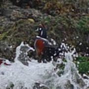 Splashed At Haystack Rock Poster