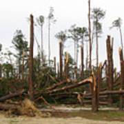 Splintered Trees Poster