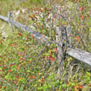 Split Rail Fence And Poison Ivy Poster