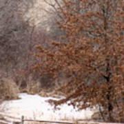 Splitrail Winter Poster
