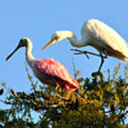 Spoonbill And Egret Poster