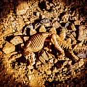 Spotlight On A Extinct Stegosaurus Poster