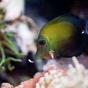 Spotted Aquarium One Fish Poster