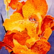 Spotted Canna Poster by M Diane Bonaparte