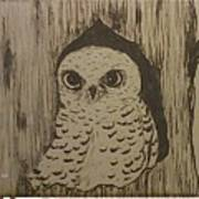 Spotted Owl Poster