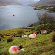 Spray Painted Sheep Ireland Poster