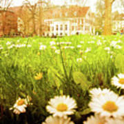 Spring. A Medow Spread With Daisies In Baden-baden, Germany Poster