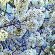 Spring Around Poster
