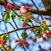 Spring Awakening 3 - Paint Poster