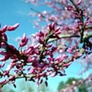 Spring Bliss Poster