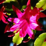 Spring Blossom 15 Poster