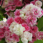 Spring Blossom 3 Poster