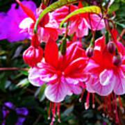 Spring Blossom 6 Poster