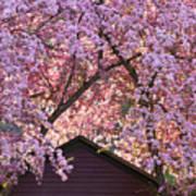 Spring Blossom Canopy Poster