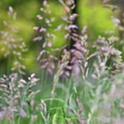 Spring Breeze 4 Poster