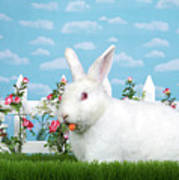 Spring Bunny Loves His Carrots Poster