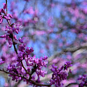 Spring Color Pop Poster