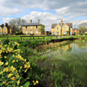 Spring Daffodils, Ramsey Village Pond, Cambridgeshire, England Poster