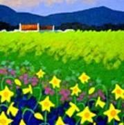 Spring Daffs Ireland Poster