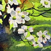 Spring Dogwoods Poster