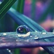 Spring Droplet Poster