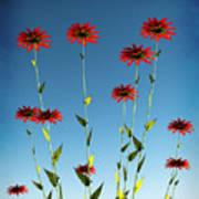 Spring Fireworks... Poster