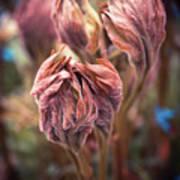 Spring Flora Poster