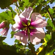 Spring Flower Peeking Out Poster