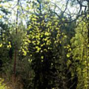 Spring Foliage Poster