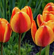 Spring Garden - Act One 2 Poster