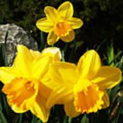 Spring Gold Poster