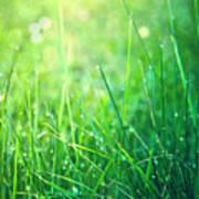 Spring Green Grass Poster