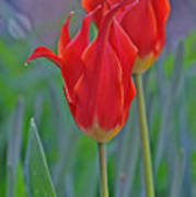 Spring Impression Poster