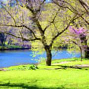 Spring In Bloom Poster