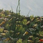 Spring In Borrego Poster