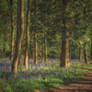 Spring In Haywood No 2 Poster