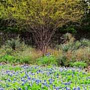 Spring In Texas Poster