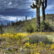 Spring In The Desert  Poster