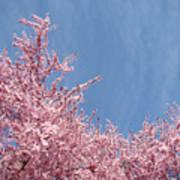 Spring Landscape Pink Trees Blossoms Blue Sky Baslee Troutman Poster