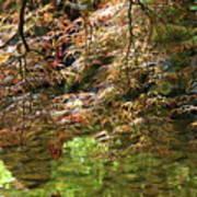 Spring Maple Leaves Over Japanese Garden Pond Poster