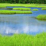 Spring Marsh Grasses Poster