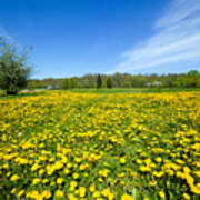 Spring Meadow Full Of Dandelions Flowers And Green Grass Poster