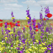 Spring Meadow With Flowers Nature Scene Poster