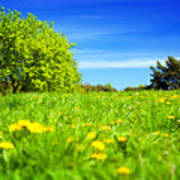 Spring Meadow With Green Grass Poster