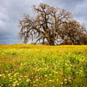 Spring Oak Tree And Wildflowers Poster
