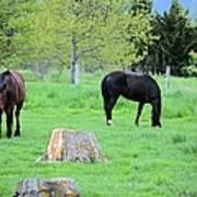 Spring Pastures Poster