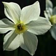 Spring Perennial Poster