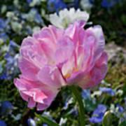 Spring Petals Poster