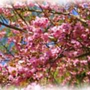 Spring Pink Blossoms Poster