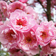 Spring Pink Tree Blossoms Art Prints Baslee Troutman Poster
